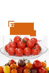 五彩番茄 美味无边